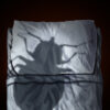Bedbug Extermination